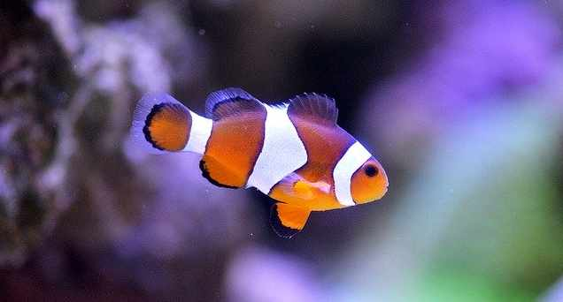 Why going to university is a bit like Finding Nemo
